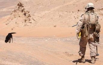 Canine IED Patrol in Afghanistan