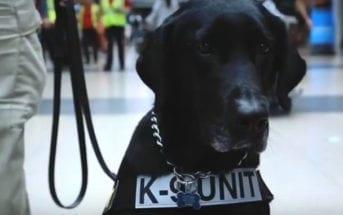 K-9 Unit TSA Security
