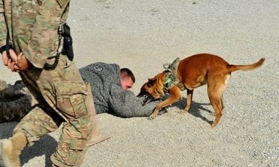 Military Working Dog Training at Bagram